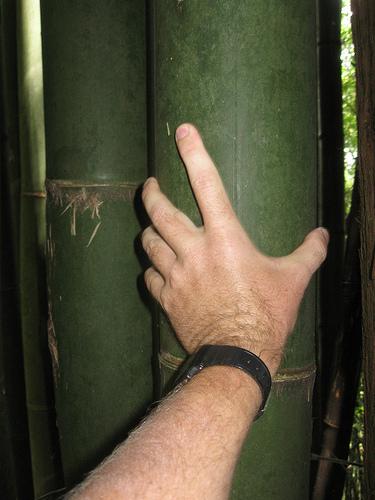 Bamboo at Alishan