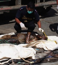 A member of the SOCO team examines a body retrieved 10 days after typhoon Yolanda struck